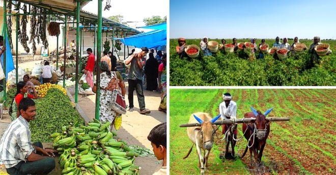 farming-india Inmarathi