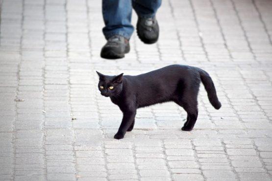 black-bad-cat InMarathi