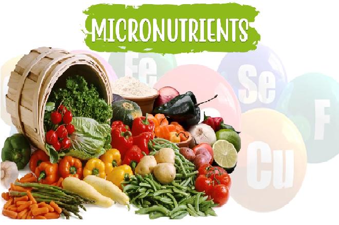 Micronutrients InMarathi