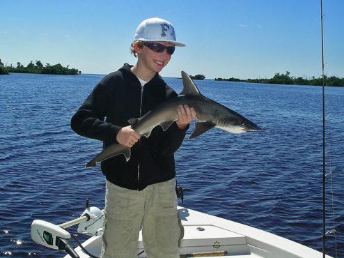 Shark InMarathi