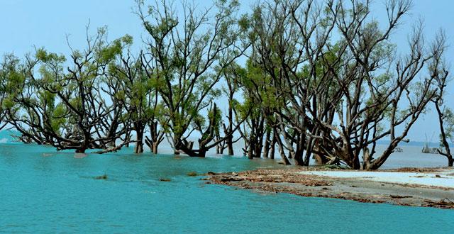 Sundarban InMarathi
