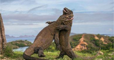 ancient animals inmarathi