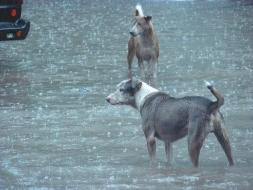 street dogs in rain InMarathi