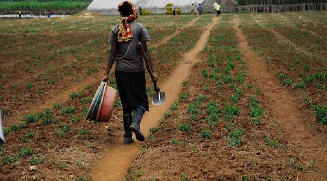 agriculture 1 InMarathi