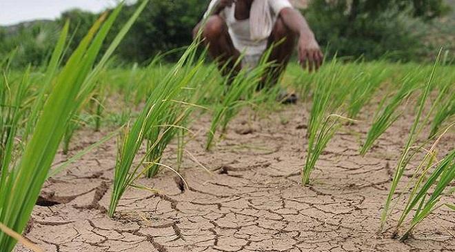 agriculture InMarathi
