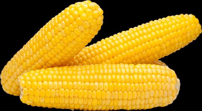 corn 1 InMarathi