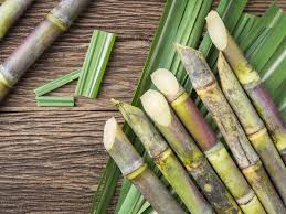 sugarcane inmarathi