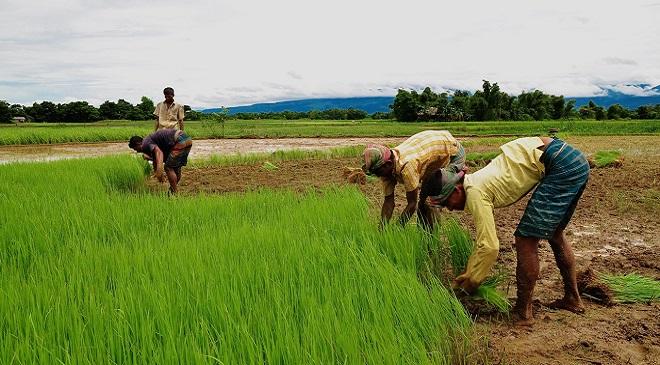 telangana farmer 3 InMarathi