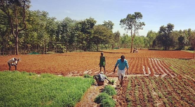 telangana farmer InMarathi