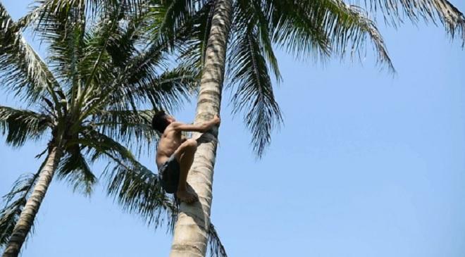 coconut tress inmarathi