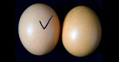 fake-eggs-inmarathi