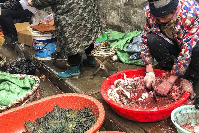 wuhan fish market inmarathi