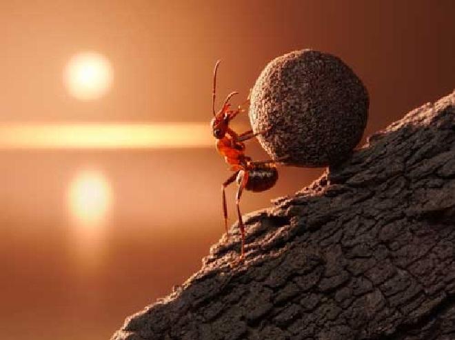 ants inmarathi