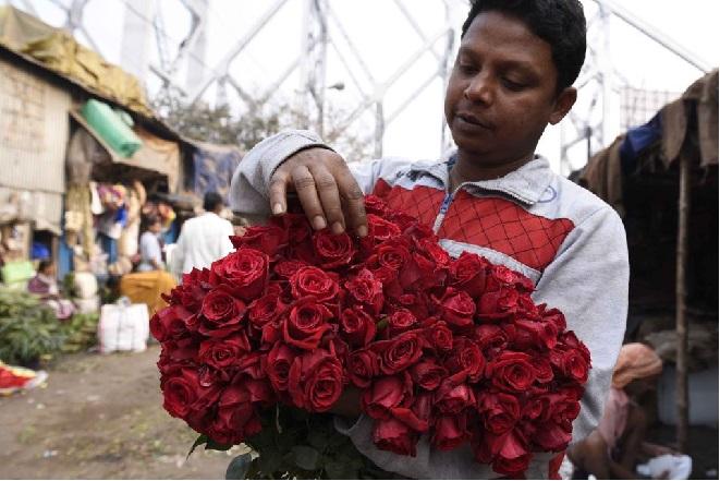 rose inmarathi