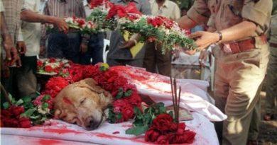army-dog-inmarathi