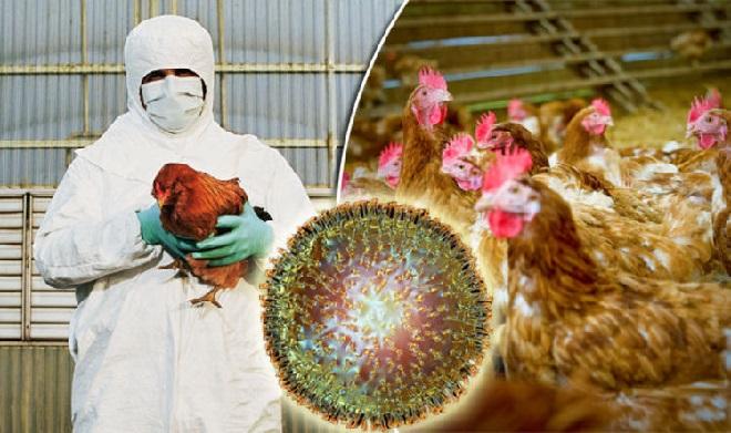 bird flu inmarathi 1