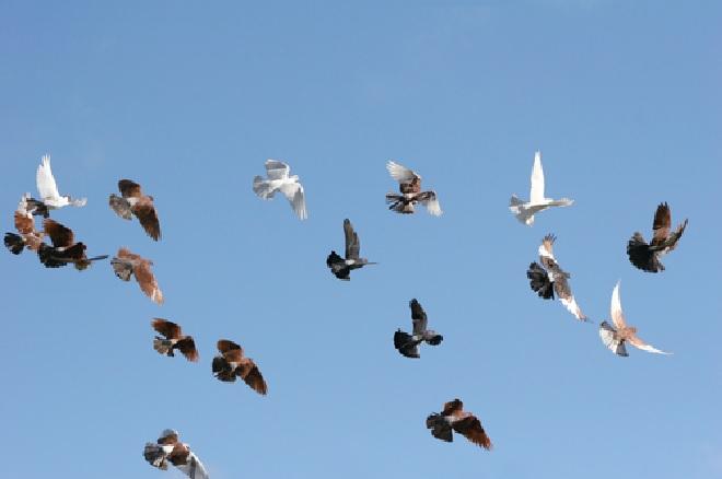 birds inmarathi