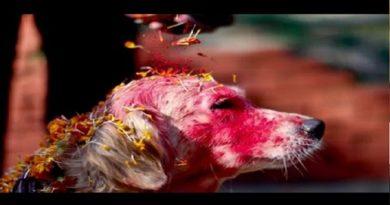 dog photo inmarathi