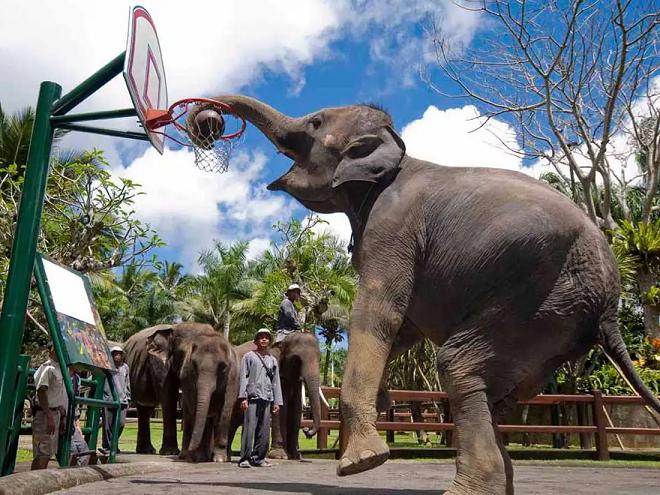 elephant park inmarathi