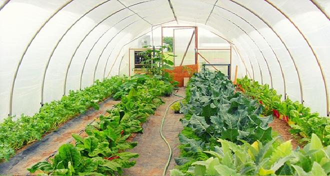 farming inmarathi