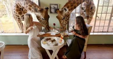 giraffe feature inmarathi