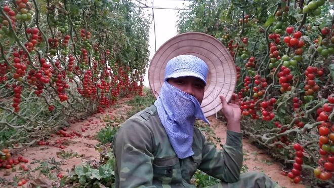 israel farming inmarathi