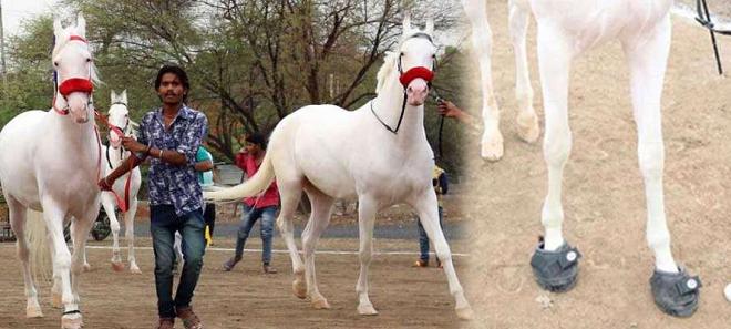 padma horse 2 inmarathi