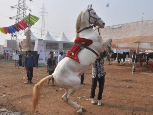 padma horse in marathi