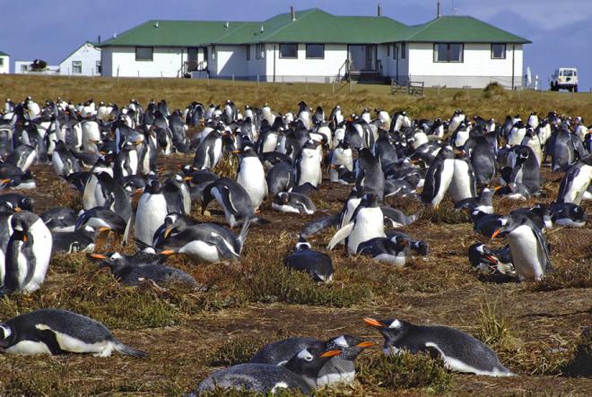 penguin inmarathi