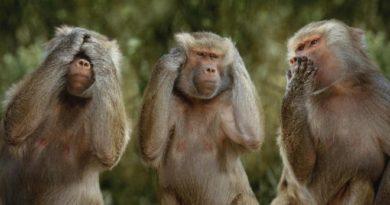 three monkeys inmarathi