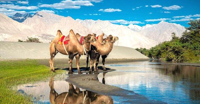 camel inmarathi