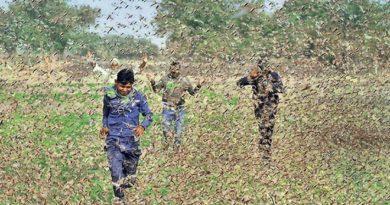 locust invasion inmarathi 4