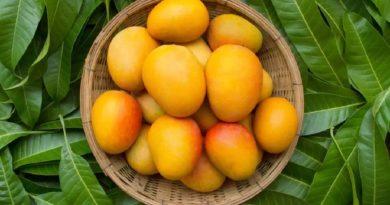 mango inmarathi