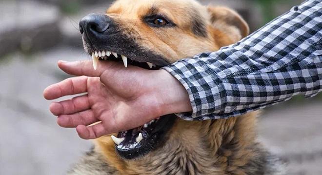 rabies inmarathi
