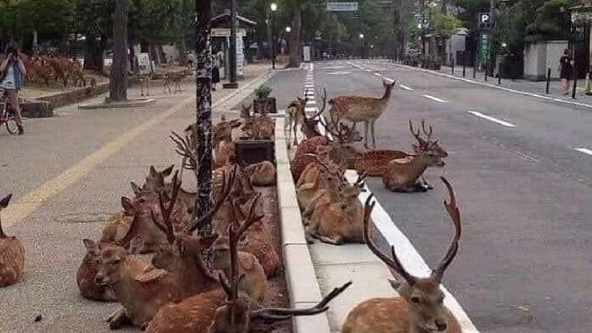 animals on road inmarathi