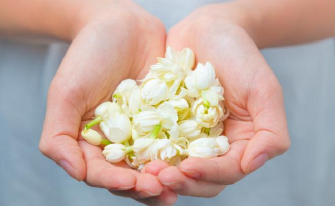 jasmine flower inmarathi