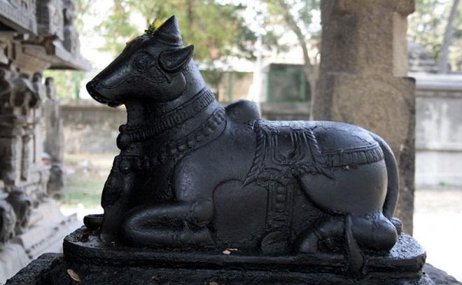 nandi inmarathi1