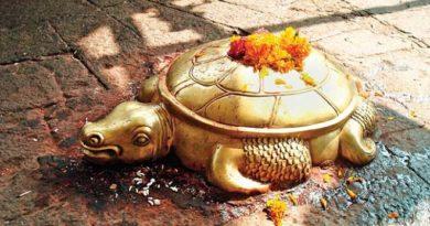 tortoise inmarathi