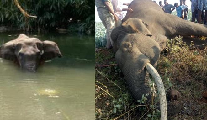 elephant killing 2 inmarathi