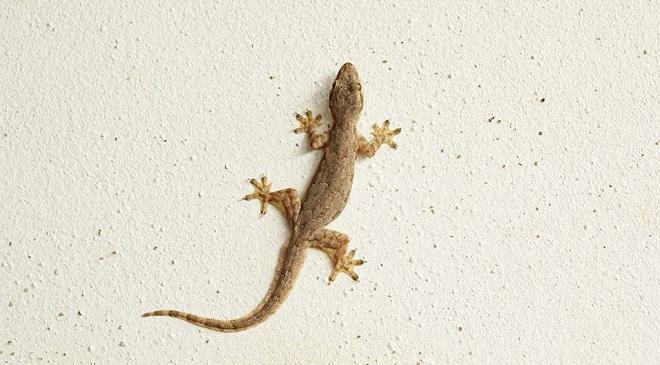 lizardinmarathi1