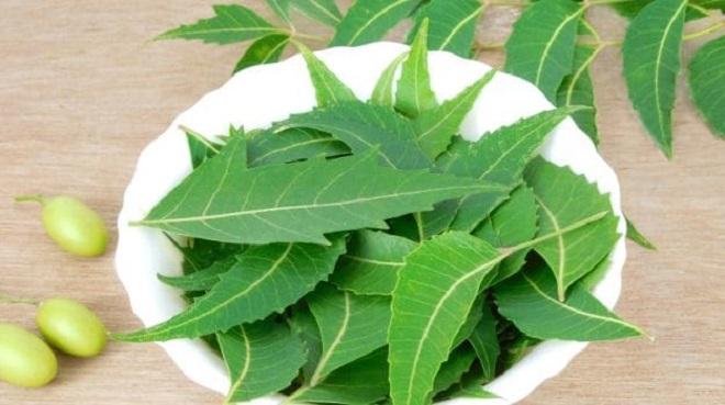 neem inmarathi 1