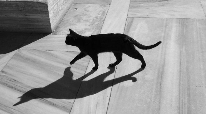 Cat crossing InMarathi
