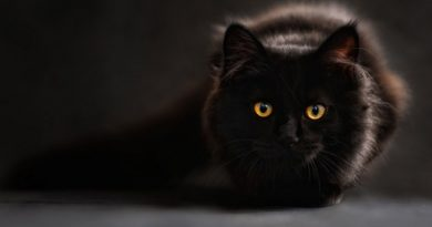 black-cat InMarathi