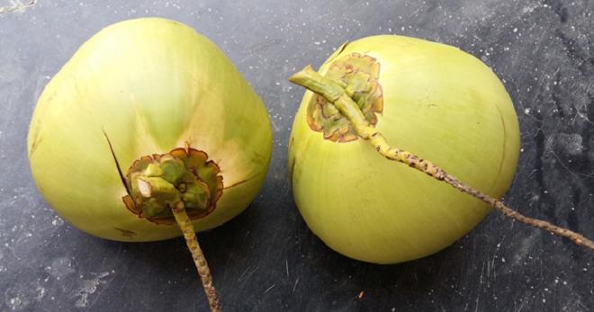 coconuts inmarathi