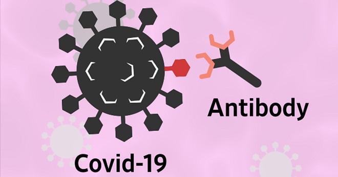 corona antibody inmarathi