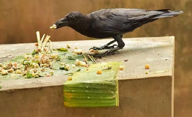crow inmarathi