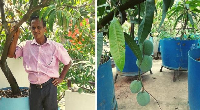 kerala man grow mangoes inmarathi