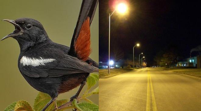 indian robin featured inmarathi