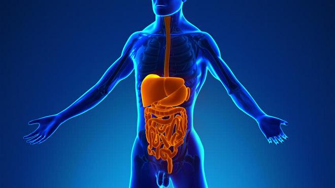 digestive system inmarathi