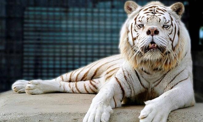 liger inmarathi1